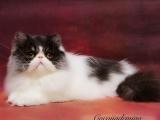 年底特惠只需888加菲猫即可带回家