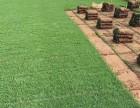 深圳各种绿化草皮 草坪批发出售 草卷草块基地A货直供