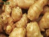 菊粉 菊芋提取物 菊苣提取物 尚诚生物