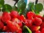 太原跟团草莓采摘一日游