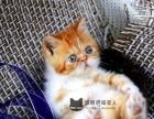 加菲猫 特别喜人
