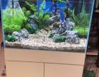 南京鱼缸换水清洗服务
