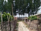 响堂管理区杨柳河边 养狗场 800平米