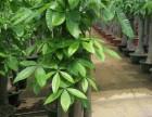 深圳花卉租摆植物租赁花卉养护绿植出租