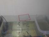 出售弧形鱼缸