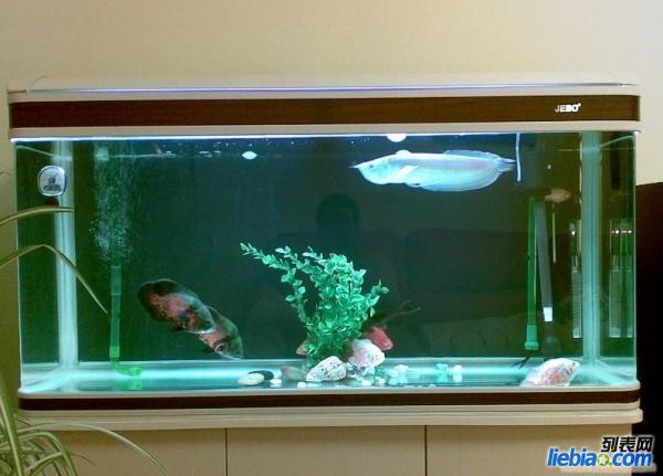 鱼缸专业搬运 免费安装 鱼缸清洗维护