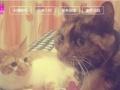 上海宠物家庭寄养承接全市宠物提供寄养.洗澡.领养.救助寄养