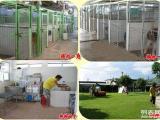 拉布拉多健康纯种幼犬 拉布拉多包养活签协议