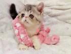 乌鲁木齐哪里卖加菲猫较便宜多少钱一只 购买包健康多久