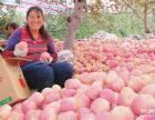 今日山东红富士苹果价格