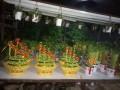 深圳公明,光明,龙华,观澜,福田绿植租售,自带大型花木场