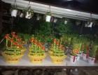 深圳松岗,沙井,福永,西乡绿植租售,自带大型花木场