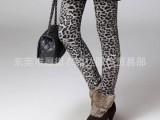 女式秋冬款加厚打底裤、女式打底裤批发、时尚女式加厚打底裤