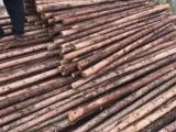 定州园林绿化木杆围栏竹竿
