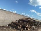 上海修树,收树,杀树头,修剪香樟树,清理绿化垃圾