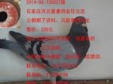 长期出售公棚鸽,特比鸽,成绩鸽 本人广东潮州人,店在潮州
