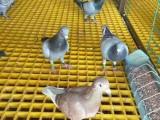 玻璃钢格栅 盐亭养殖易清洗玻璃钢格栅盖板厂家直销