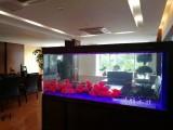 鱼缸维护 上门鱼缸布景消毒安装维修观赏鱼搭配