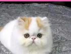 五一所有猫咪特价出售 百姓价格 保健康 疫苗齐全