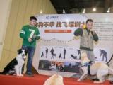 鄭州飛碟訓犬基地幫你建立你和狗狗之間溝通的橋梁