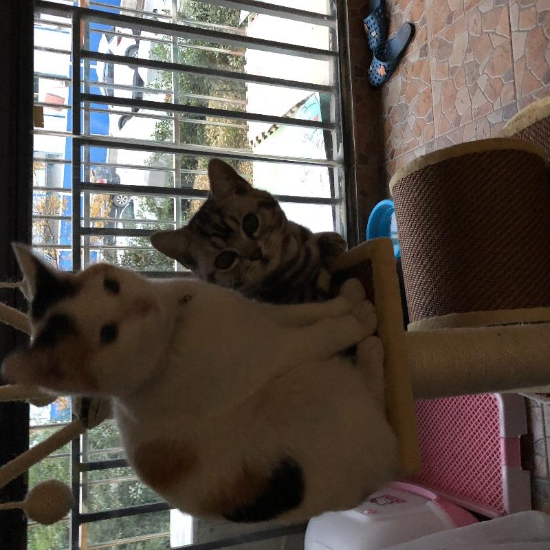 急寻爱猫人士