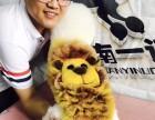 沧州宠物美容培训 沧州宠物美容学校 沧州宠物美容师培训学校