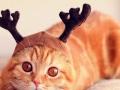 猫咪、仓鼠、小型犬无忧寄养