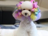 A级宠物美容师专业上门为狗狗猫咪美容洗澡哦