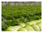 港口有机蔬菜配送收费标准,公司提供**服务