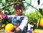 橘子艺术创想 武汉亲子活动