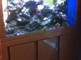 深圳鱼缸清洗