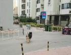 新华周边 桃园开发区 厂房 15亩平米