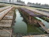 黑斑蛙益農養殖