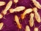 自贡灭白蚁公司+自贡灭飞蚂蚁公司