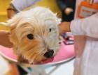 北京全城宠物医师上门打疫苗驱虫保健