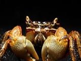 批发彩色蜗牛观赏蟹