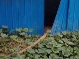 合肥低价抽粪 化粪池清理 污水池抽运及下水道疏通 管道检测