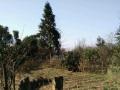 金沙县后山乡红花村12组 土地 40000平米