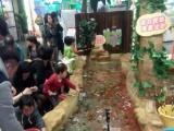 锦鲤鱼池过滤设计,吃奶鱼池过滤设计