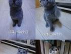 猫咪全部出售急急急