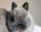 大同远大兔场批发零售各种品种宠物兔