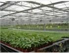 保暖式温室工程