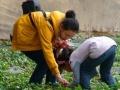 乾亨生态园摘草莓、吃农家饭、自助烧烤、垂钓、观光。