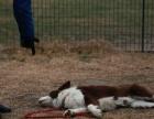 优它宠物训练学校,24小时陪护式训练,节假日不打烊