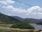 崖州区南滨农场三陵水库旁一千株果树
