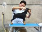 双血杜宾犬 专业繁殖 可上门挑选 协议质保