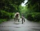 武汉萌宠外景摄影,动物抓拍摄影师