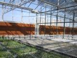 柑橘育苗温室内部 可移动苗床 厂家直销