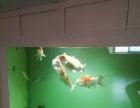 家庭、商业水族鱼缸、鱼池设计造景,鱼缸换水及养护