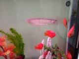 出售元宝鹦鹉8条。大海螺货换别的鱼